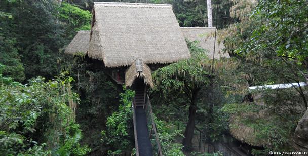 Camp-Canopee-Guyane1.jpg