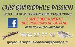 guyaquariophile maquette 2.jpg