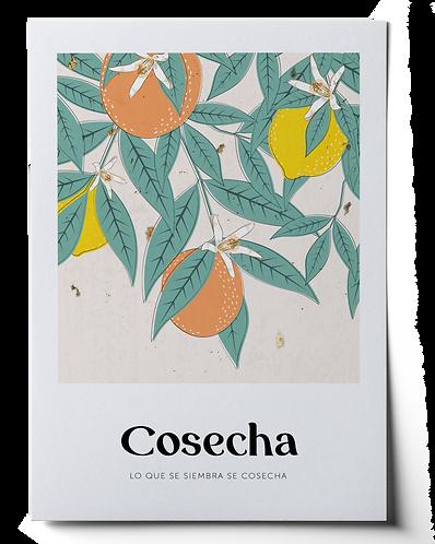 Cosecha Art Print