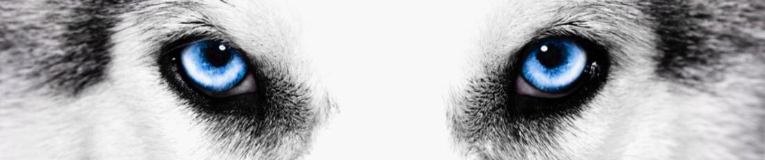 eyes-of-husky_edited_edited.png