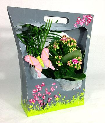 Pack cadeaux 2 plantes