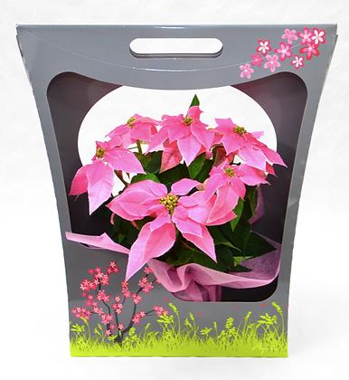 Pack cadeaux 1 plante
