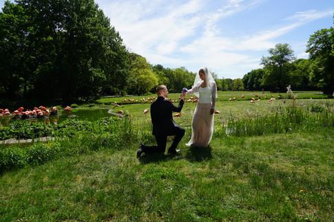 Küss die Hand: Der Bräutigam legt sich für seine Braut im weißen Hochzeitskleid ins Zeug - die Flamingos lässt das aber kalt. Das Foto des Hochzeitspaars entstand im Tierpark Berlin-Lichtenberg.