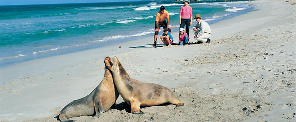 Seal Bay Guided Tours Kangaroo Island