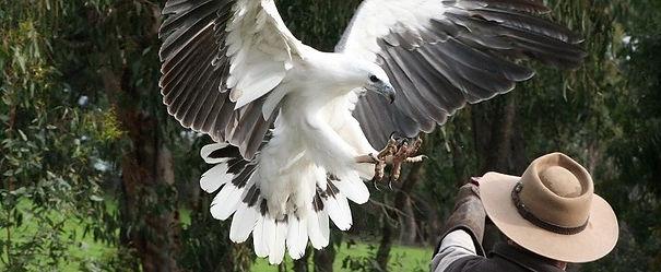 Raptor Domain Birds of Prey Fang-Tastic