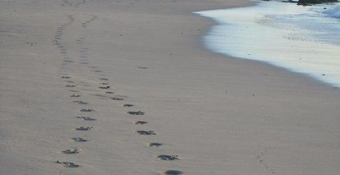 Vivonne Bay beach - Kangaroo Island