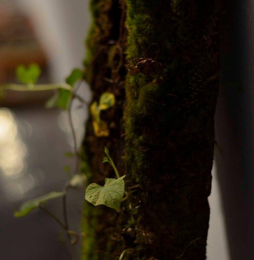 Pedacito verde
