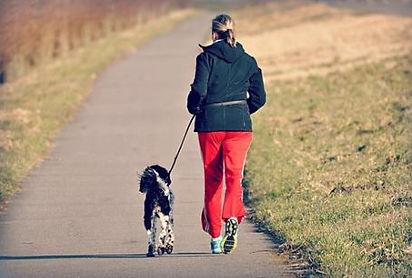 Walking dog enjoying outdoors.JPG