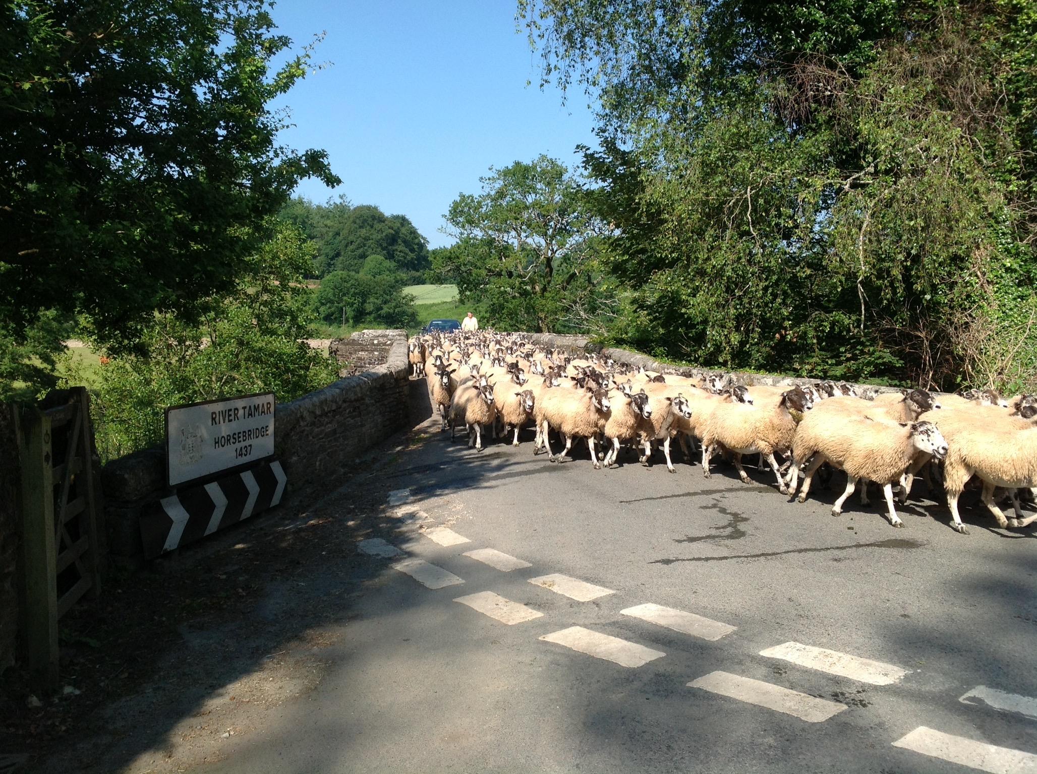 Rush hour on Horsebridge