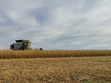 Stepping Up Your Management Game: Soybean Variety Selection