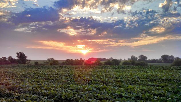 sunrise beans.jpg