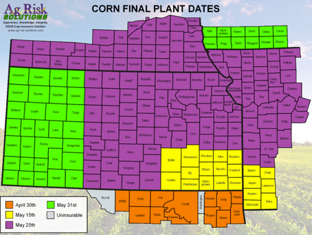 Late Planting Considerations for Corn