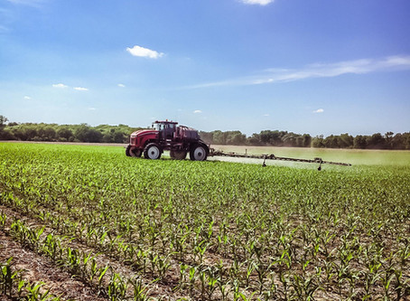 Top 6 Spray Considerations for Post Applications in Corn