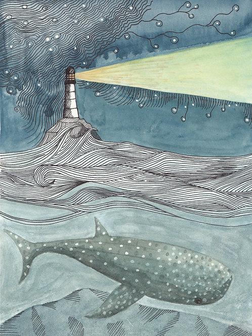 Whale Shark - A4