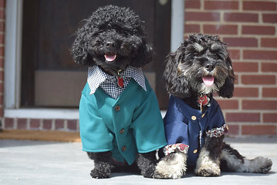 Two dogs in clothes