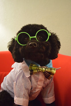 Dog wearing glasses & clothes