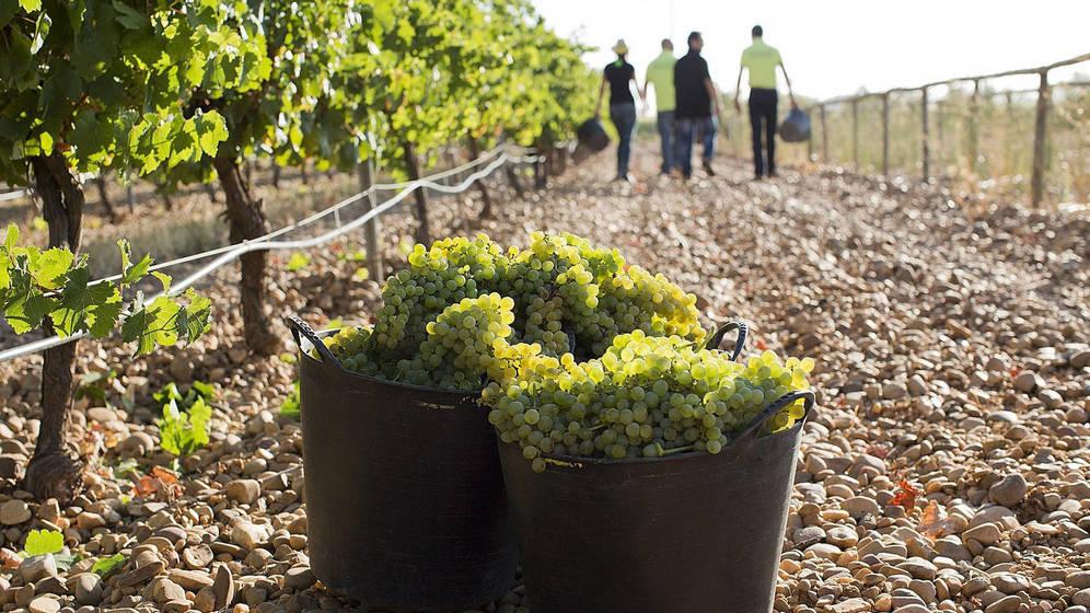 bodegas-menade-vinos-ecologicos-naturalmente