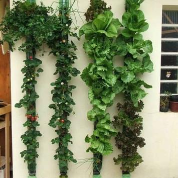 Jardin-colgante-con-reciclaje.jpeg