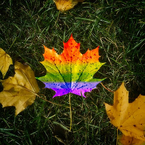A rainbow leaf on a bed of green grass surrounded by other yellow leaves.