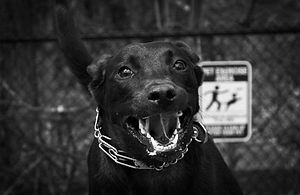 A Black & White image of a dog snarling as it lunges at the camera. A sign in the back depicts a stick figure playing frisbee with a dog.