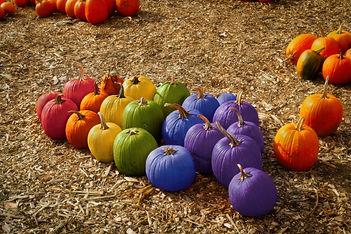 Pumpkin Web.jpg