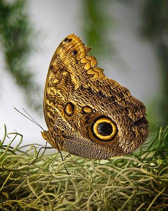 Butterfly #6: 8x10