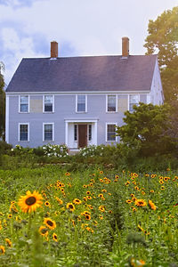 A field of yellow sunflowers that lead off in the distance to a blue-grey colonial farmhouse under a blue sky with clouds.