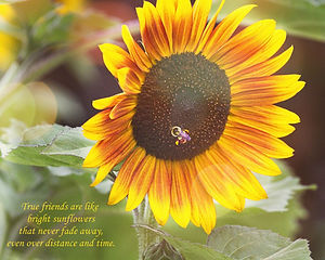 """A color photograph of a sunflower with a bee in the middle and the saying """"True Friends are like bright sunflowers that never fade away, even over distance and time."""""""