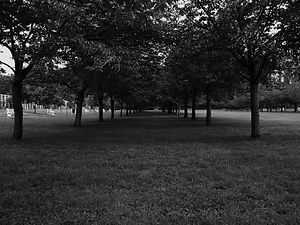 Black and White pic of a path between sets of trees in a field