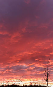 A dramatic image of a fire-red clouded sunset with the silhouette of a small tree and ground in the foreground.
