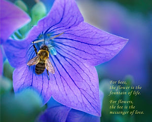 """A color photograph of a purple flower with a bee in the stamen with the phrase """"For bees, the flower is the fountain of life. For flowers the bee is the messenger of love."""""""