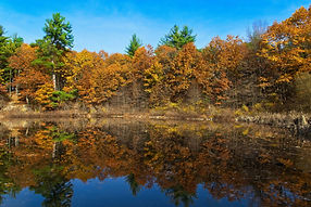 A bright color landscape photo of trees in Autumn with a birght blue sky, all reflected in crystal clear lake water.
