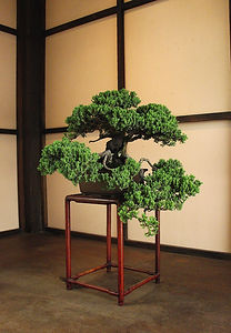 Bonsai tree on a wood stand in a Japanese hut