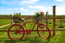A color photo of a bright red bicycle against a wooden fence in a meadow with blue sky and white clouds.