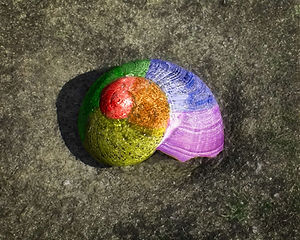 A Macro shot of a nautalis-shaped shell that is colored red, orange, yellow, green, blue, and purple like a rainbow