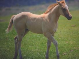 5 - DE FROSTYS TEQITA - ECKERT PERFORMANCE HORSES - PIC.JPG