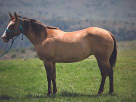 23 - DE DERBYWOOD - ECKERT PERFORMANCE HORSES - PIC.JPG