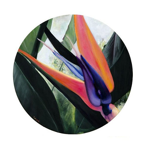 Bird of Paradise Flower Images - Arrow of Love