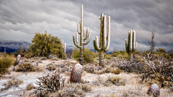 Frosted Sonoran Desert