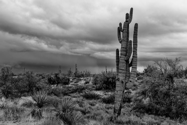 Storming in the Sonoran
