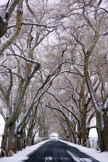 Winter on Dodge Lane