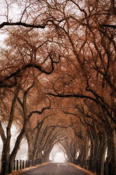 Last of Fall on Dodge Lane