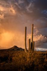 Stormy Sonoran Sunset