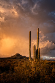Stormy Sonoran Sunset