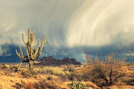 Sunlit Saguaro