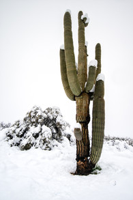 Snow in the Sonoran Desert