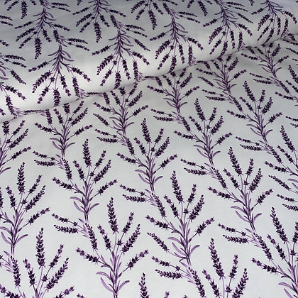 Jersey Lavender Plant