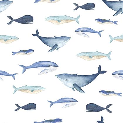 Jersey Wale Aquarell
