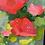 Thumbnail: Tickle Pink   102cm x 76cm