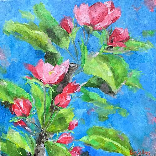 Apple Blossoms     30 x 30cm